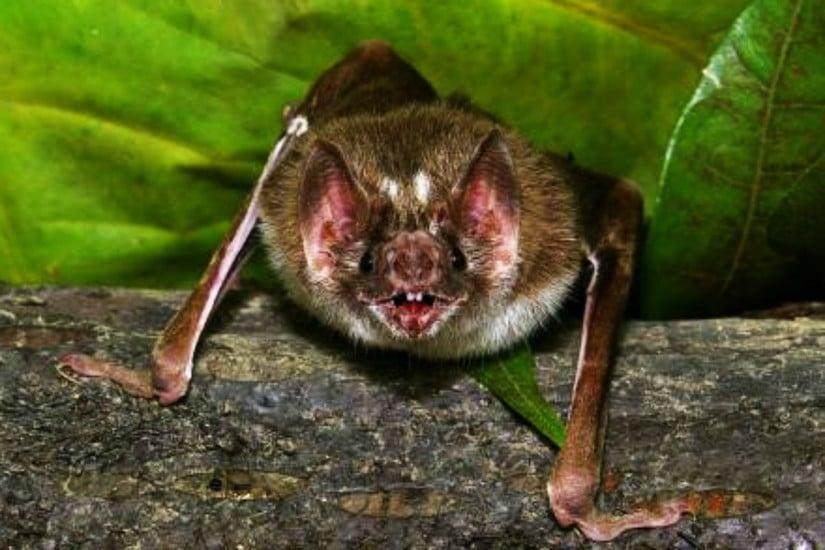 Secretaria identifica quarto morcego com raiva em Curitiba