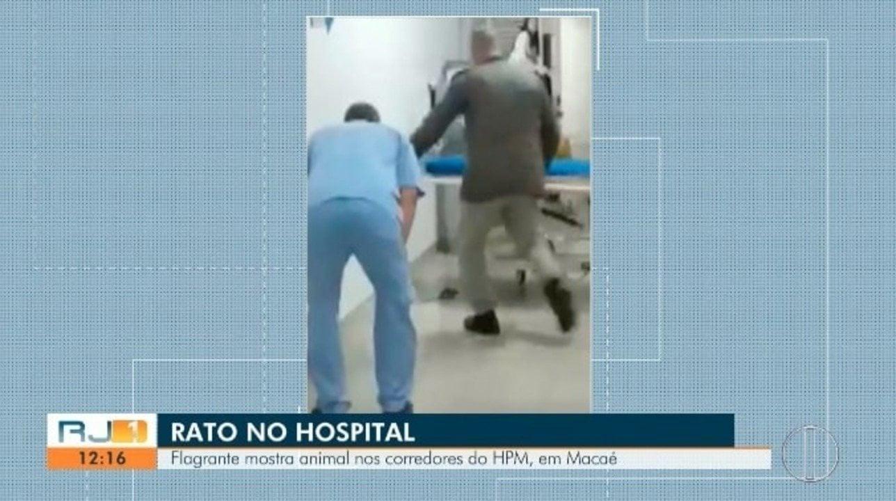Rato causa gritaria e corre-corre dentro de hospital em Macaé, RJ (+ vídeo)